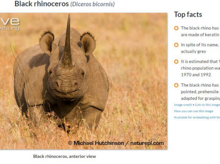 Wildscreen Archive Screenshot of Rhinoceros Top Facts