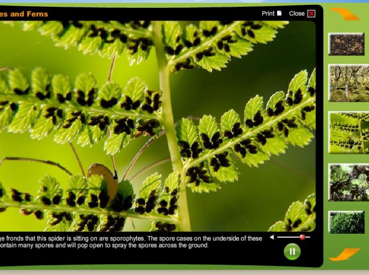 Mosses and ferns screenshot