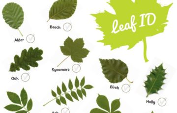 leaf id screenshot