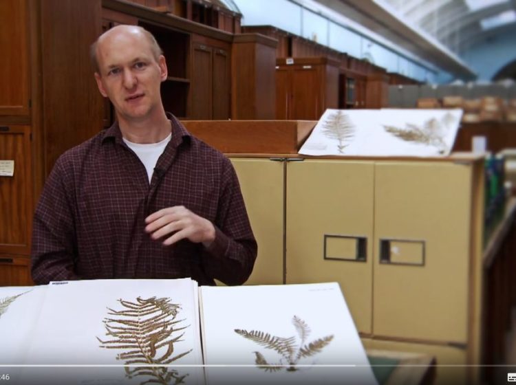 plants under pressure screenshot