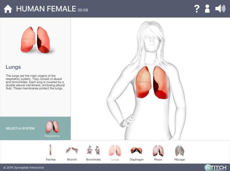 Build A Body Biology Systems Human Wowscience Science Games And Activities For Kids