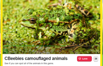 Camouflaged animals Screenshot
