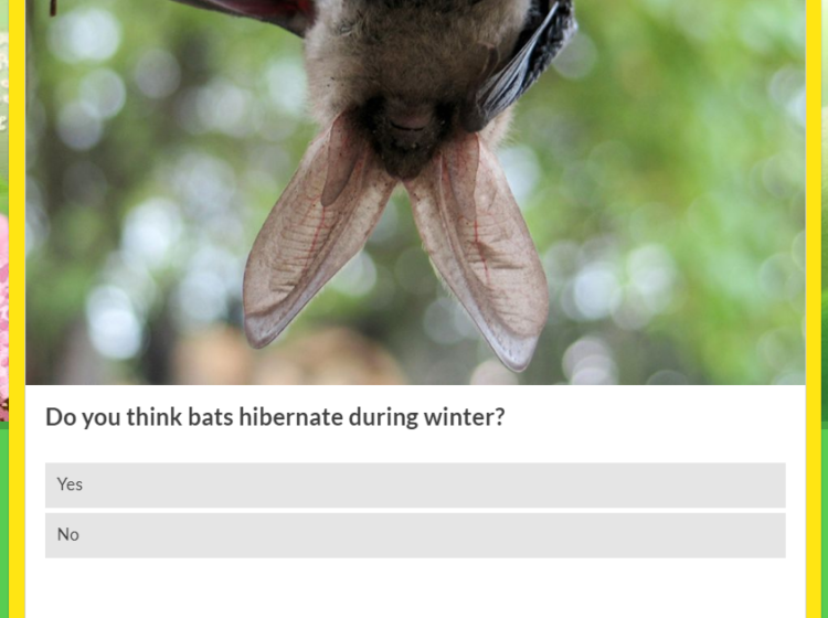 Which animals hibernate? Screenshot