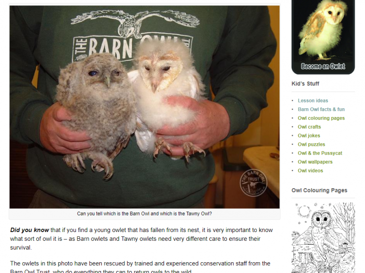 barn owl trust screenshot