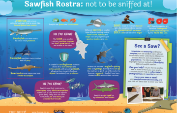kids against plastic screenshot sawfish info