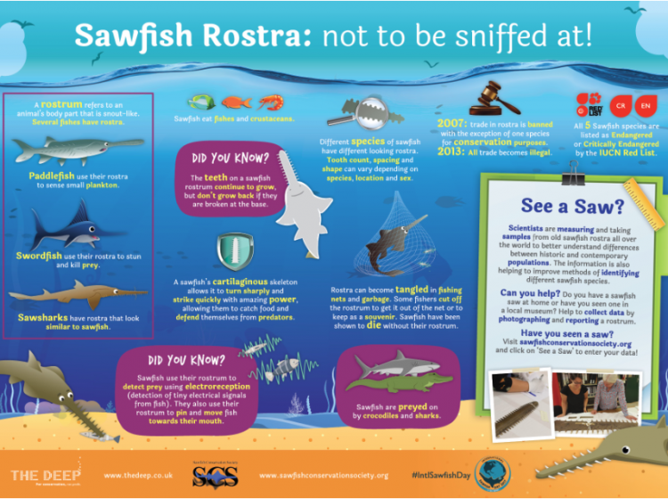 kids against plastic screenshot sawfish info