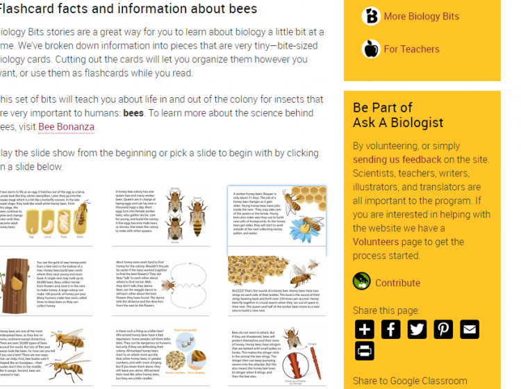 Ask a biologist screenshot of flashcard and information about bees
