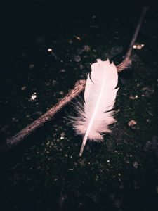 feather and stick